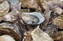 oesters_website_2.jpg